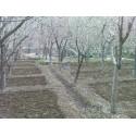 بازسازی و فضاسازی باغ