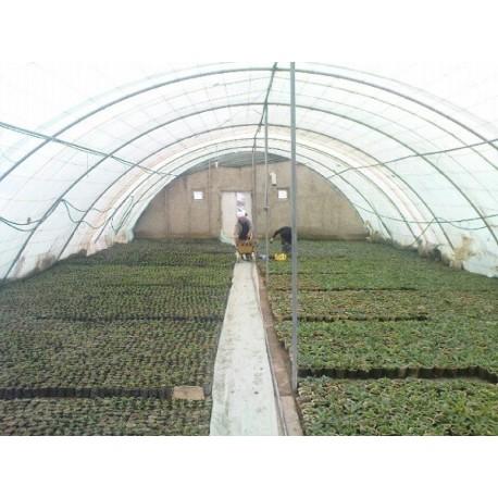 تولید گل و گیاه
