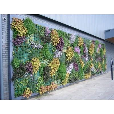 پروژه دیوار سبز رستوران دکاس هلند