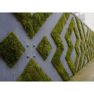 پروژه دیوار سبز هتل زوانن برگ هلند