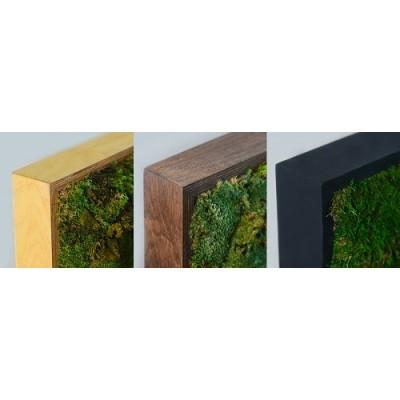 پروژه خزه سبز هتل دیکر هلند