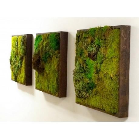 پروژه دیوار سبز هتل شیتون هلند