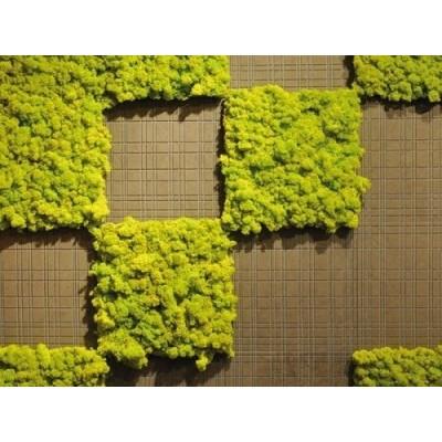 پروژه دیوار سبز رستوران وودبرگ هلند