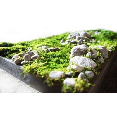 پروژه خزه سبز هتل هوم هلند