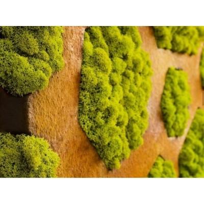 پروژه دیوار سبز رستوران واک هلند